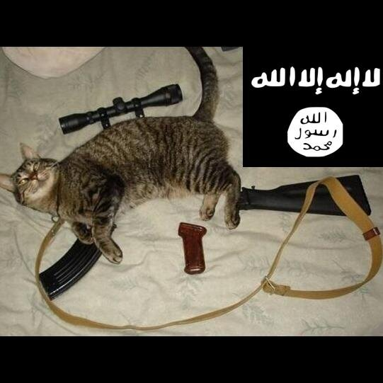 The Islamic State is made of cats